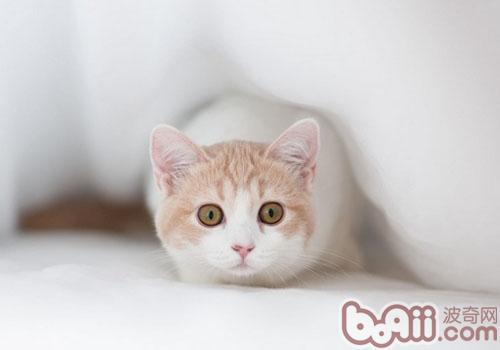 猫咪为什么会露出它的菊花-成猫饲养